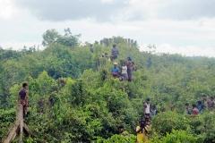 Barbed wire (Rohingya refugees-) (18)